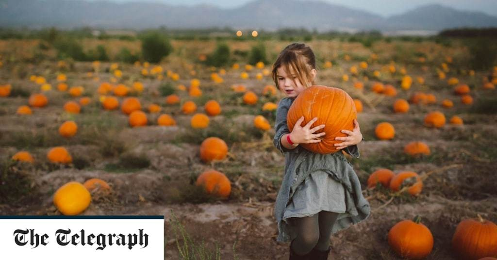 Where to go pumpkin picking in the UK - A 2020 guide to Halloween fun, from Essex to Yorkshire