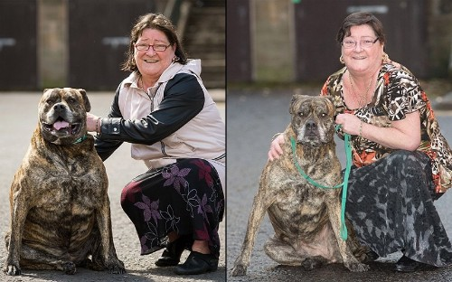 Pet Fit Club: The winners of PDSA's 2015 pet slimming contest, in pictures - Telegraph