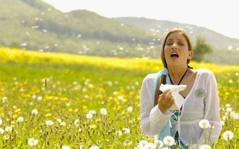 Increase in hay fever down to last year's hot summer, professors say