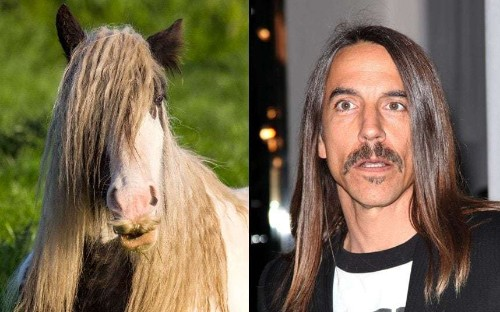Animals that look like celebrities, in pictures