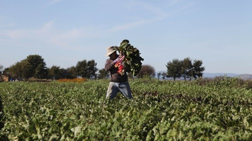 A Boost for Farmers Who Aren't Old and White