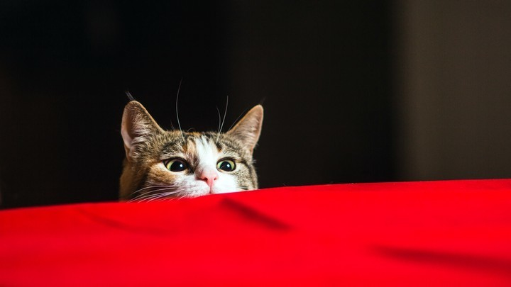 Why We Think Cats Are Psychopaths