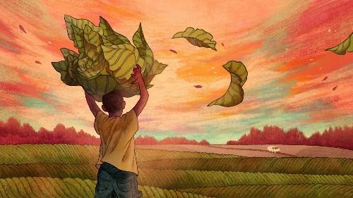 The Overlooked Children Working America's Tobacco Fields