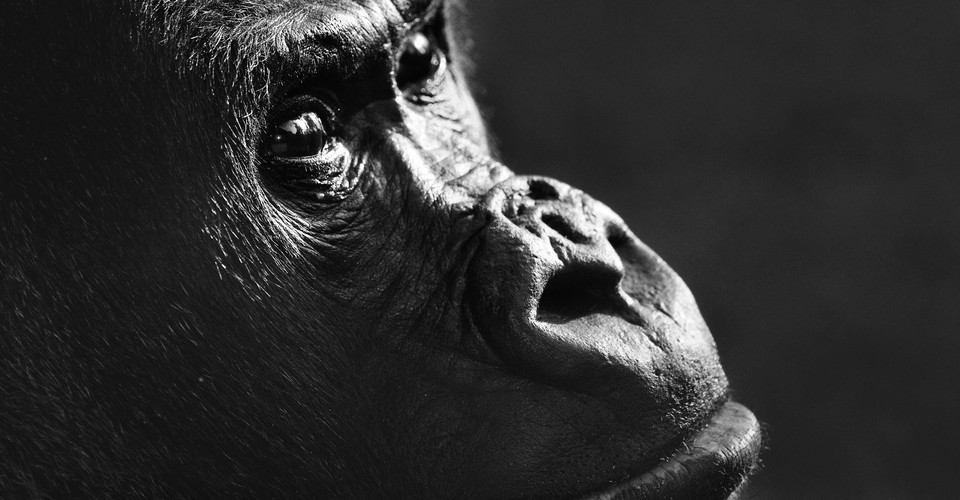 Apes Might Know That You Don't Know What They Know