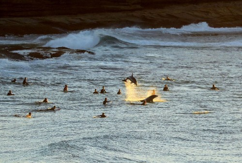 Sydney Surfing Photos