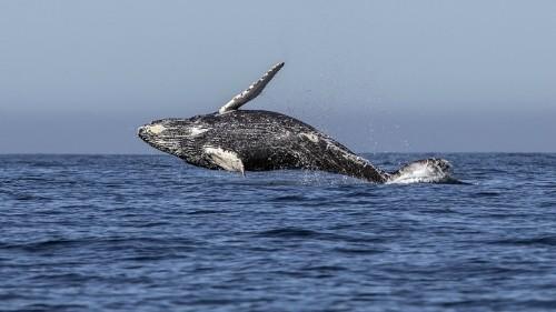 Why Whales Got So Big