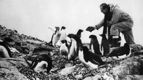 Penguins Were a Lonely Explorer's Best Friends
