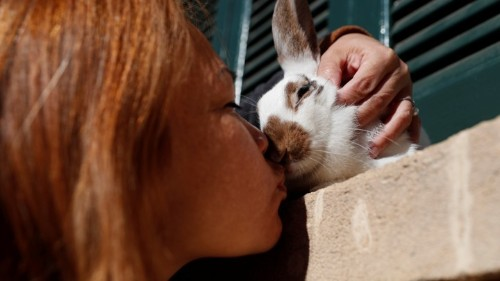 People Have Believed a Lie About Rabbit Domestication for Decades