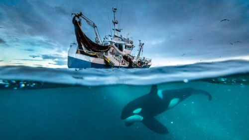 The Beauty and Horror of Blue Planet II
