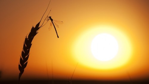 Insects Are In Serious Trouble