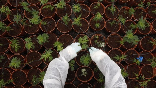 How Backyard Pot Farming Is Helping Kids With Autism