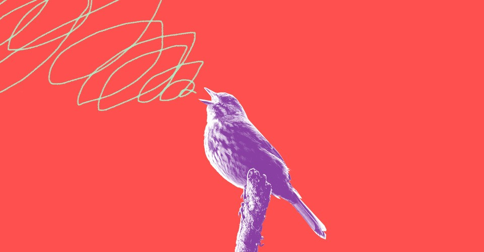 The Birdsong That Took Over North America