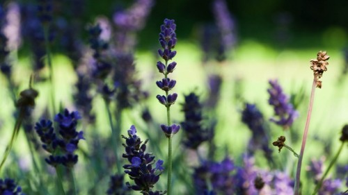 The Allergens in Natural Beauty Products