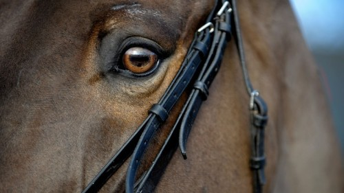 Horses Can Read Human Facial Expressions