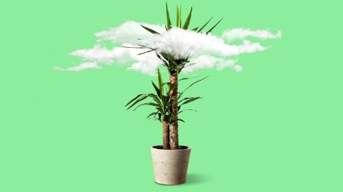 What Indoor Plants Clean the Air Best? None of Them.