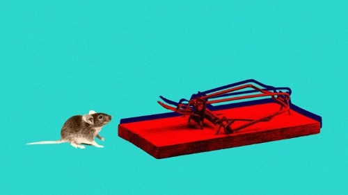 The Neuroscientific Case for Facing Your Fears