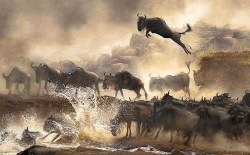 Winners of the 2014 Sony World Photography Awards, Part I