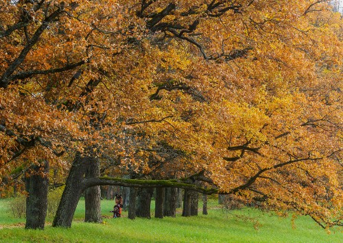 Images of the Season: Fall Is in the Air, Part II