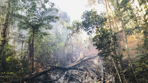 A Forgotten Forest of Ancient Trees Was Devastated by Bushfires