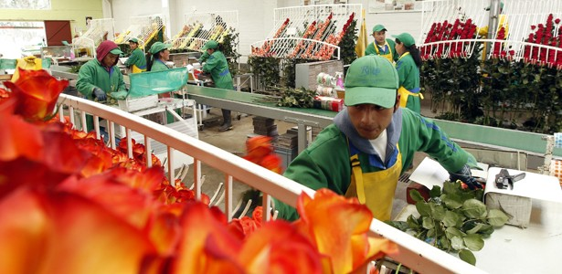 There's a 1 in 12 Chance Your V-Day Flowers Were Cut by Child Laborers