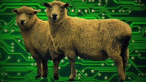 Internet-Connected Sheep and the New Roaming Wireless