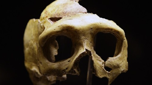 The Myth Of the Traumatized Neanderthal