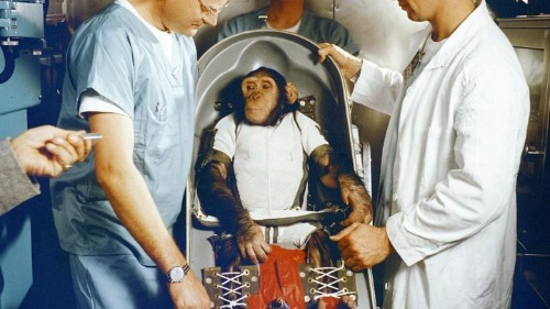 Why Soviets Sent Dogs, Not Primates, to Space