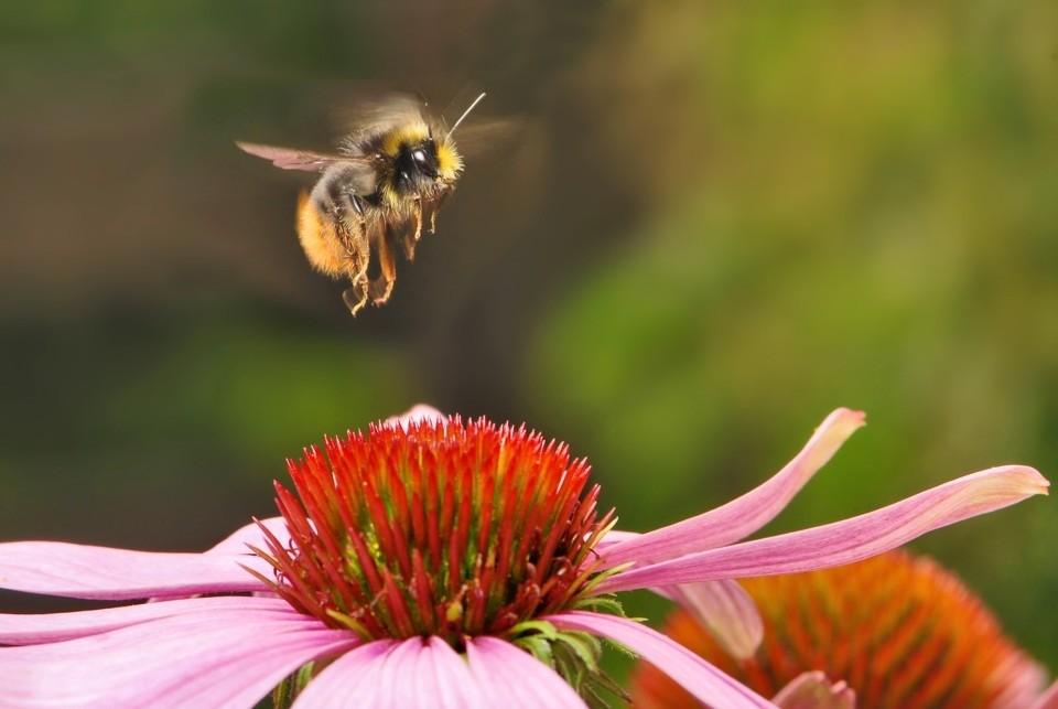 Beekeeping 🐝 - Magazine cover