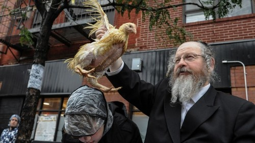 Animal-Rights Groups Are Targeting a Jewish Ritual on Yom Kippur