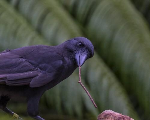 BIRD BRAINS - cover