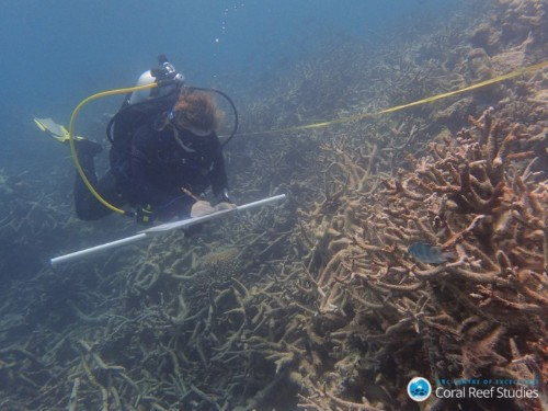 Since 2016, Half of All Coral in the Great Barrier Reef Has Died
