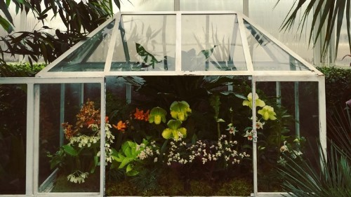 How a Glass Terrarium Changed the World