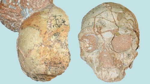 Apidima 1 Is the Oldest Human Fossil Outside Africa