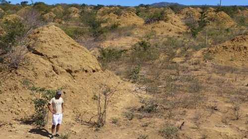 For 4,000 Years, Termites Have Been Building Something Incredible in Brazil