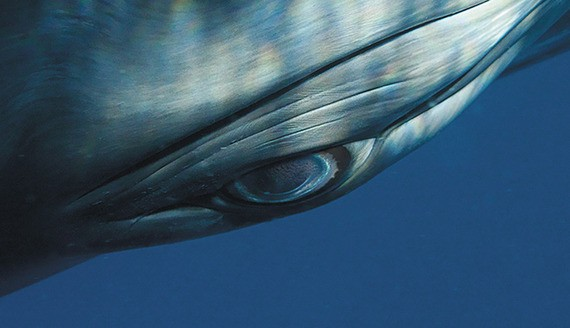 You're Eye-to-Eye With a Whale in the Ocean—What Does It See?