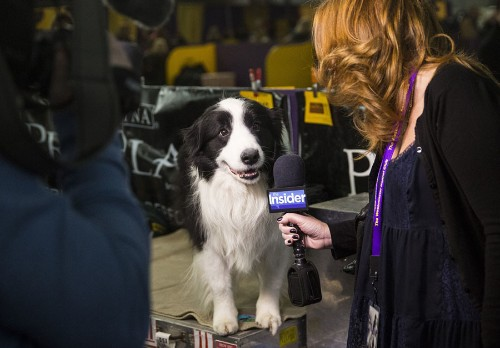 Sound Bites: Dogs on the Microphone