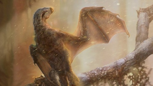 Another Bat-Winged Dinosaur Has Been Found