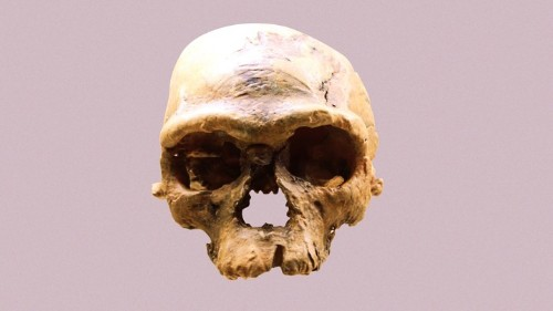 The New Story of Humanity's Origins in Africa