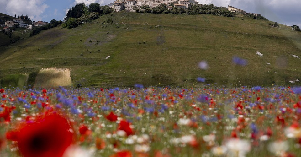 The Colorful Blooms of Castelluccio, Italy