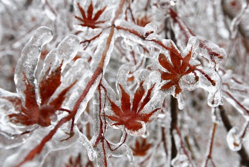 A Christmas Ice Storm