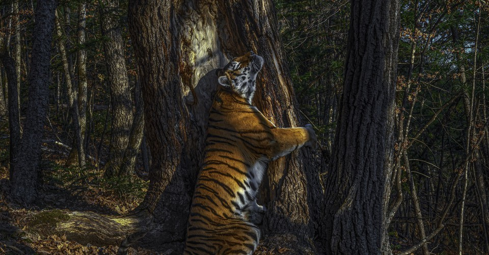 Winners of Wildlife Photographer of the Year 2020