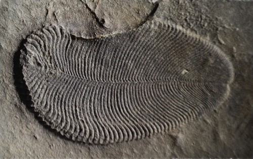 A 558-Million-Year-Old Mystery Has Been Solved