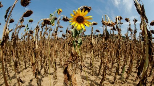 July 2019 Is 'Shaping Up to Be the Warmest Month Ever'