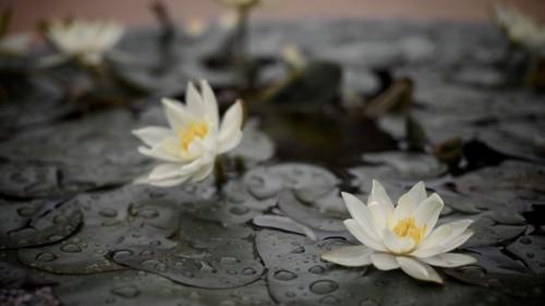 Treating Chronic Pain With Meditation