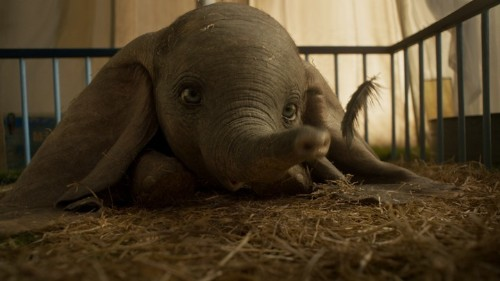 Tim Burton Finds His Newest Misfit Hero in Dumbo