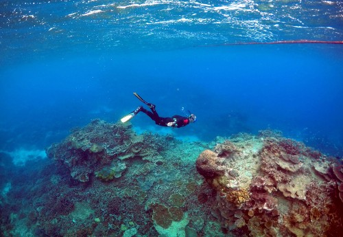 Australia's Great Barrier Reef at Risk