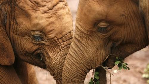 Elephants Have a Secret Weapon Against Cancer