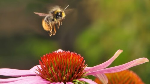 The World's Most Popular Insecticides Are Messing With Bees