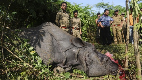 Why Does a Rhino Horn Cost $300,000? Because Vietnam Thinks It Cures Cancer and Hangovers