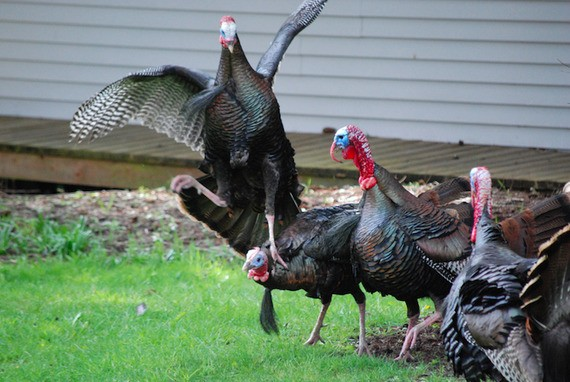 If You Must Talk Politics at Thanksgiving, Here's How